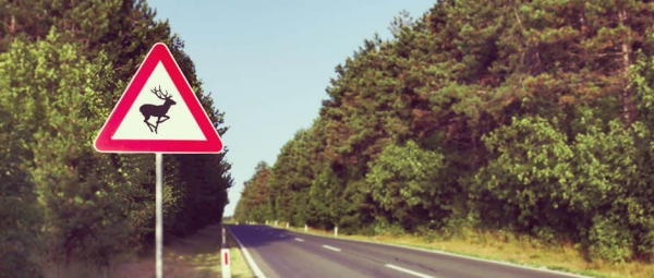Magyar találmánnyal előzhetőek meg a vadgázolásos balesetek